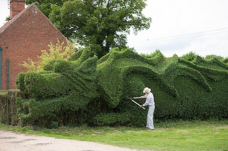 JohnBrooker hedge dragon 04 - John Brooker Spends 13 Years transforming a Hedge into a Massive Dragon