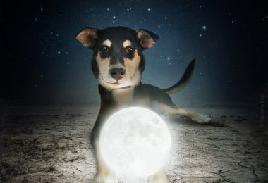 Help Dogs with Images by Sarolta Ban