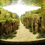 Aquascaping Is Underwater Art Unlike Anything You've Ever Seen