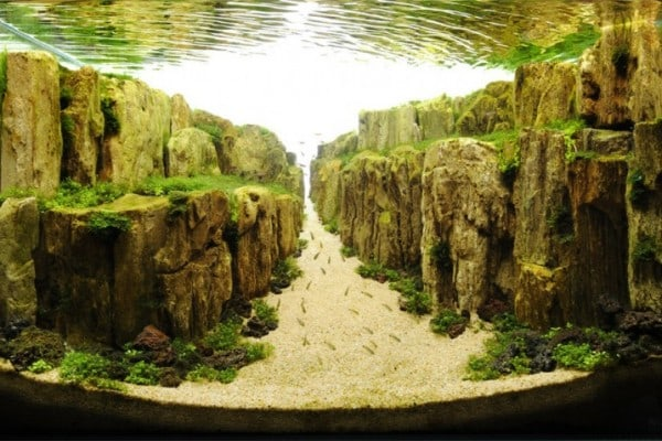 underwater-art-aquascaping-10-1024x612