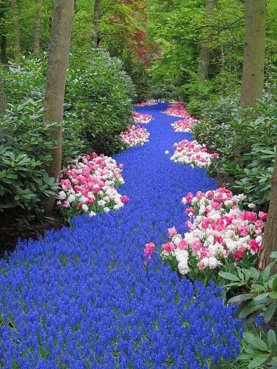 river-of-flowers-holland-2