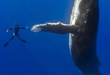 diver-whale-high-five-perfect-timing-529x700
