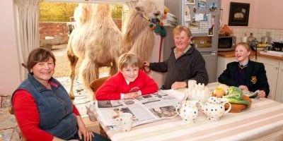 The camel family: the Fossetts raise herd of six pet camels in Warwickshire