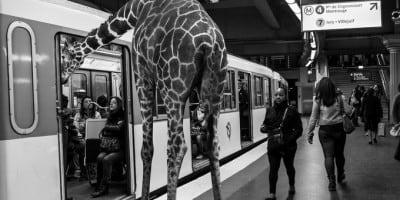 Animals in the Paris Metro