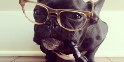 Adorable Photos of a Cute French Bulldog Dressed for Halloween