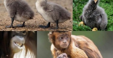 Our Animal Brothers