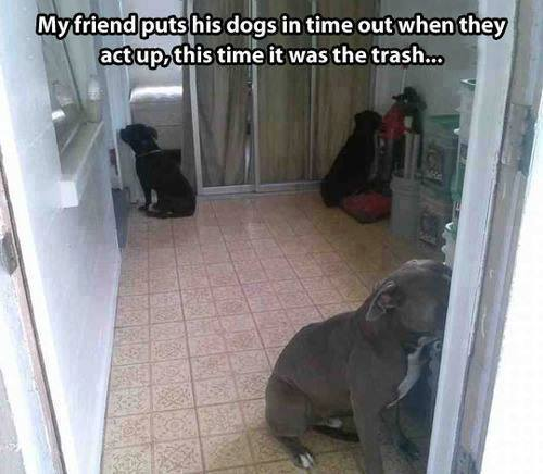 These Bad Behaving Furballs Get The Shaming Treatment -dogs, cute