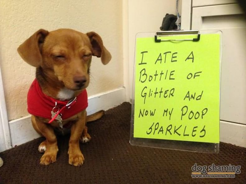 funny-pet-shaming-10-03-2014-14