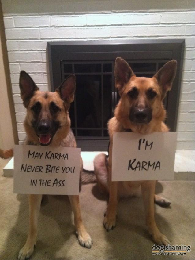 funny-pet-shaming-10-03-2014-16