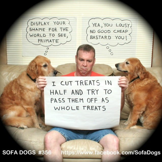 funny-pet-shaming-10-03-2014-17