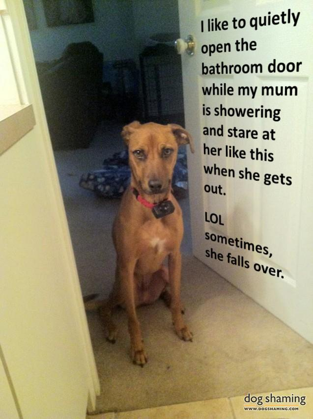 funny-pet-shaming-10-03-2014-19