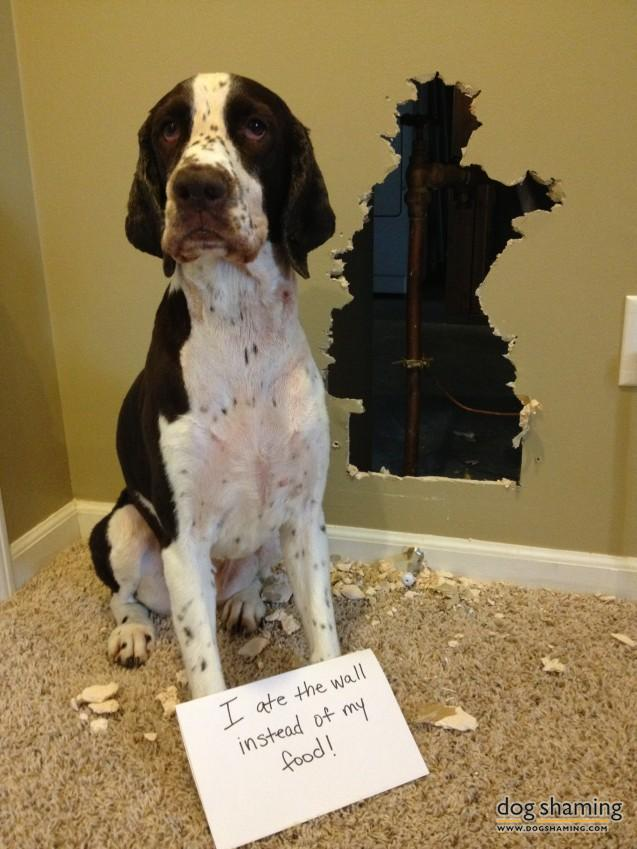 funny-pet-shaming-10-03-2014-2