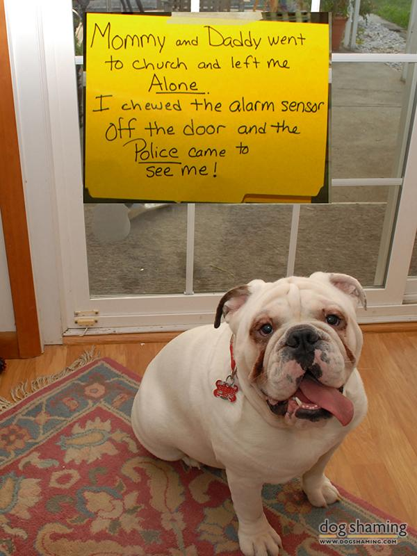 funny-pet-shaming-10-03-2014-23