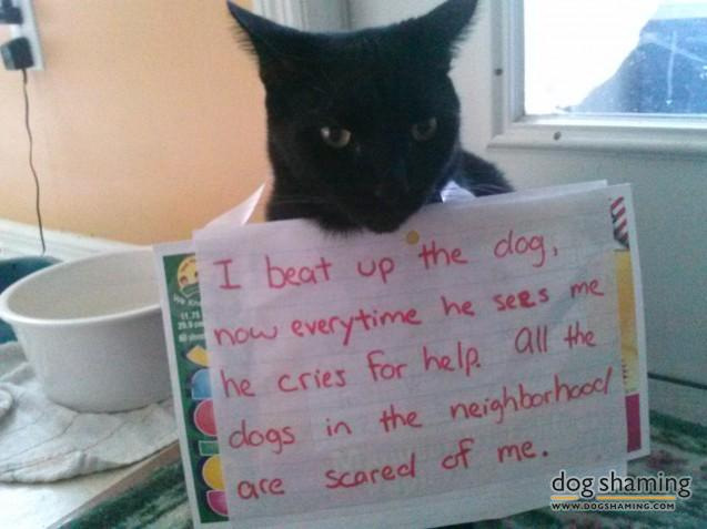 funny-pet-shaming-10-03-2014-6