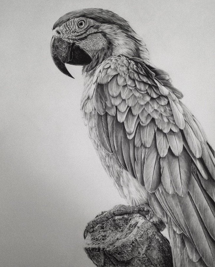 Monica Lee Creates Stunning Photo-Realistic Drawings with Just a Pencil -pencil, hyper-realistic, drawings, bw