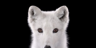 Amazing Studio Portraits of Wild Animals by Brad Wilson