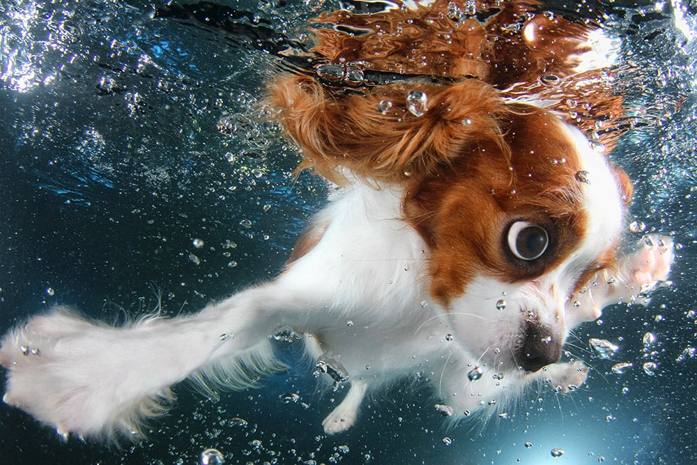 3036127-slide-s-5-feel-the-puppy-love-with-these-underwatermontypromo