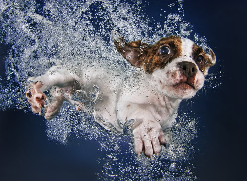 3036127-slide-s-6-feel-the-puppy-love-with-these-underwaterpopsiclepromo