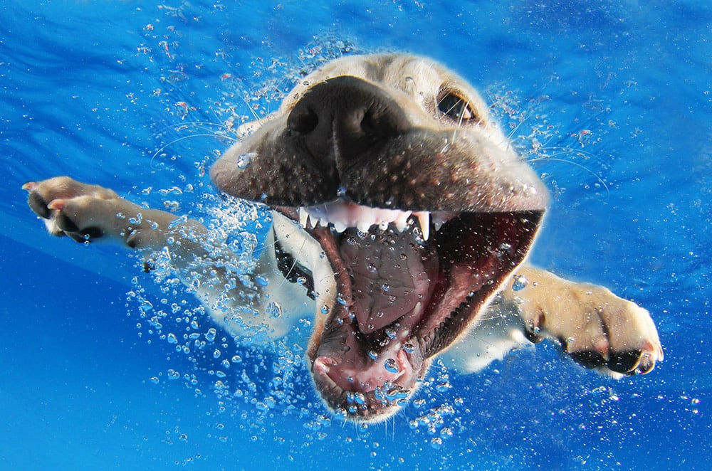 3036127-slide-s-8-feel-the-puppy-love-with-these-underwaterreasonpromo