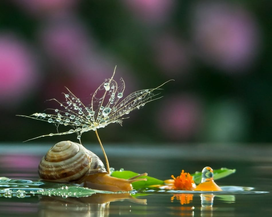 20 Amazing Photos That Prove Snails Live In A Magical World -world, snail, nature, amazing