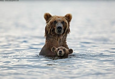 These Animals Will Teach You How To Be a Good Parent 10