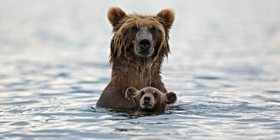 These Animals Will Teach You How To Be a Good Parent