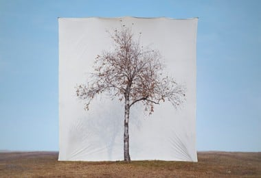 """""""Tree"""" by Myoung Ho Lee 1"""