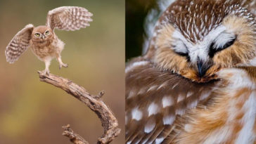 27 Amazing Owl Photos To Take Your Breath Away -incredible, amazing