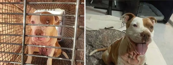15 Before And After Adoption Pictures That Will Take Your Heart Away -puppies, dogs, cute