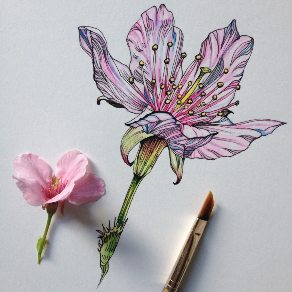 Flowers-in-Progress-A-beautiful-series-of-illustrations-by-Noel-Badges-Pugh-11-1024x1024