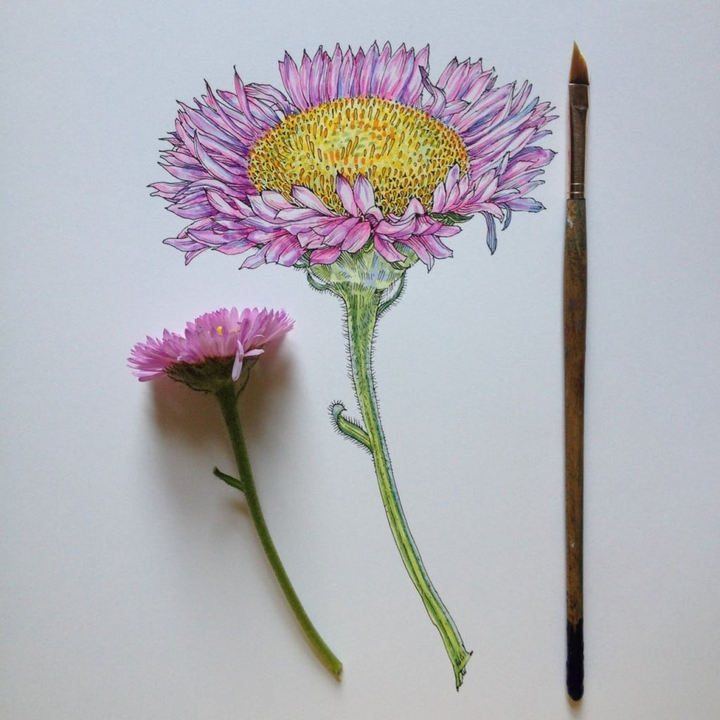 Flowers-in-Progress-A-beautiful-series-of-illustrations-by-Noel-Badges-Pugh-12-1024x1024