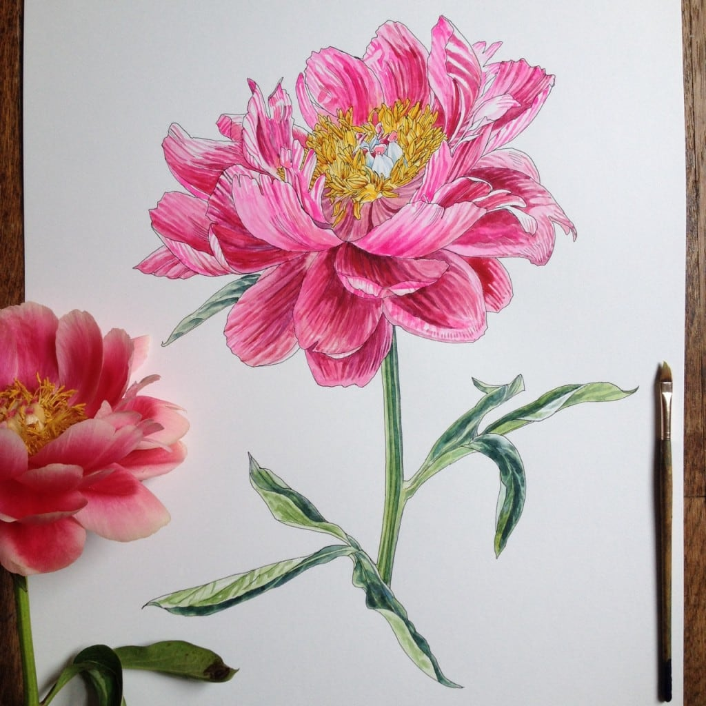 Flowers-in-Progress-A-beautiful-series-of-illustrations-by-Noel-Badges-Pugh-14-1024x1024