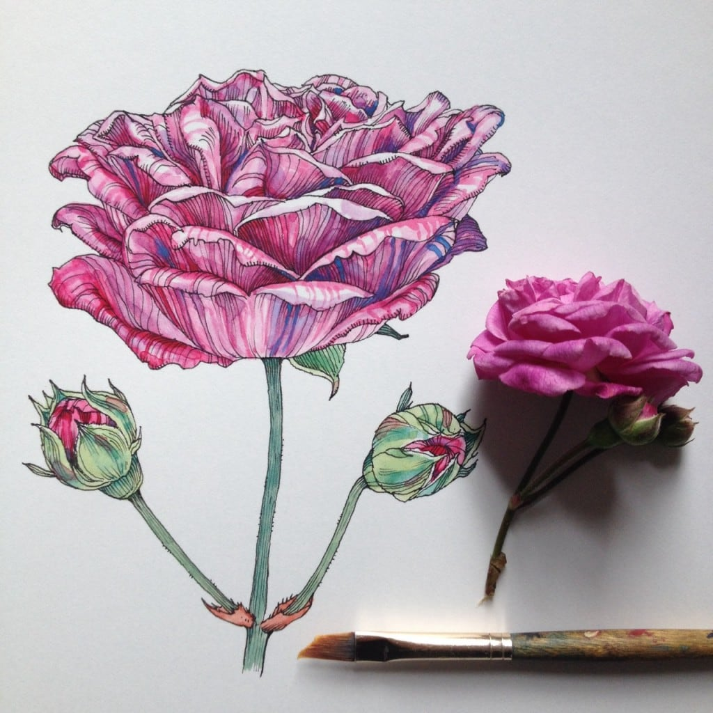 Flowers-in-Progress-A-beautiful-series-of-illustrations-by-Noel-Badges-Pugh-18-1024x1024