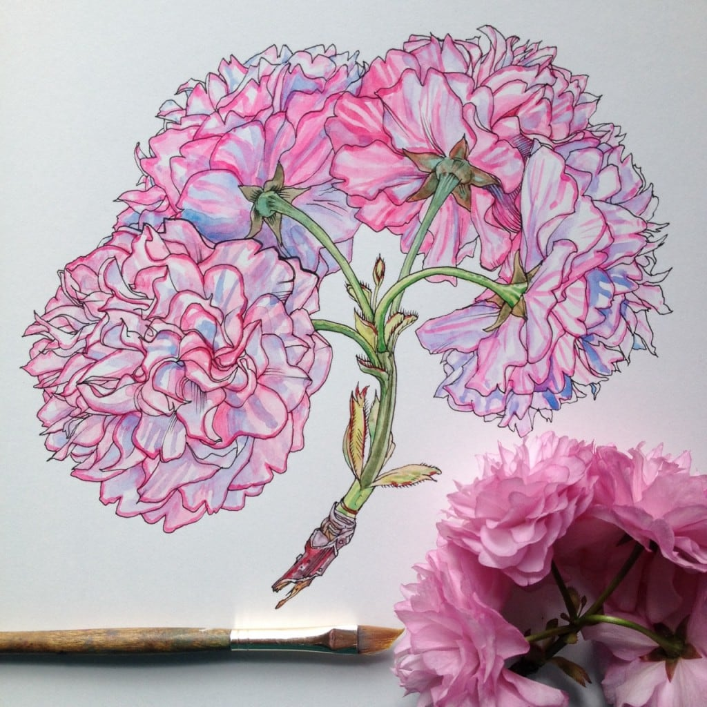 Flowers-in-Progress-A-beautiful-series-of-illustrations-by-Noel-Badges-Pugh-7-1024x1024