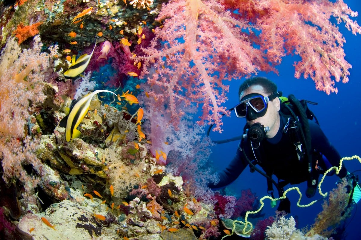Scuba Diving Andaman Islands