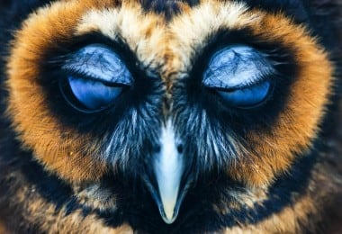 27 Amazing Owl Photos To Take Your Breath Away 16