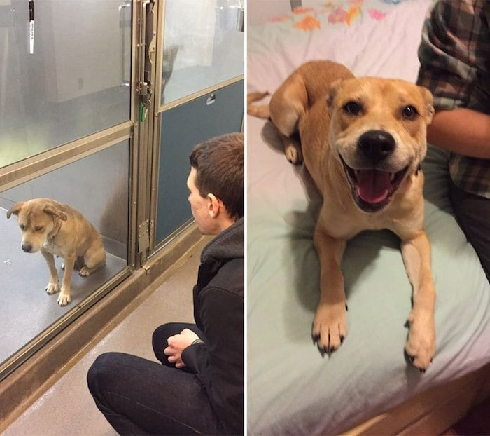 Before and After Adoption - Heartwarming Photos of Adopted Dogs -Series, dogs