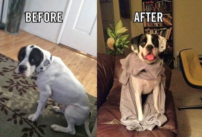 before_after_adoption_15