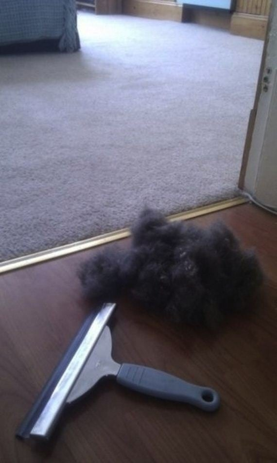 Use a squeegee to remove pet hair from carpet.