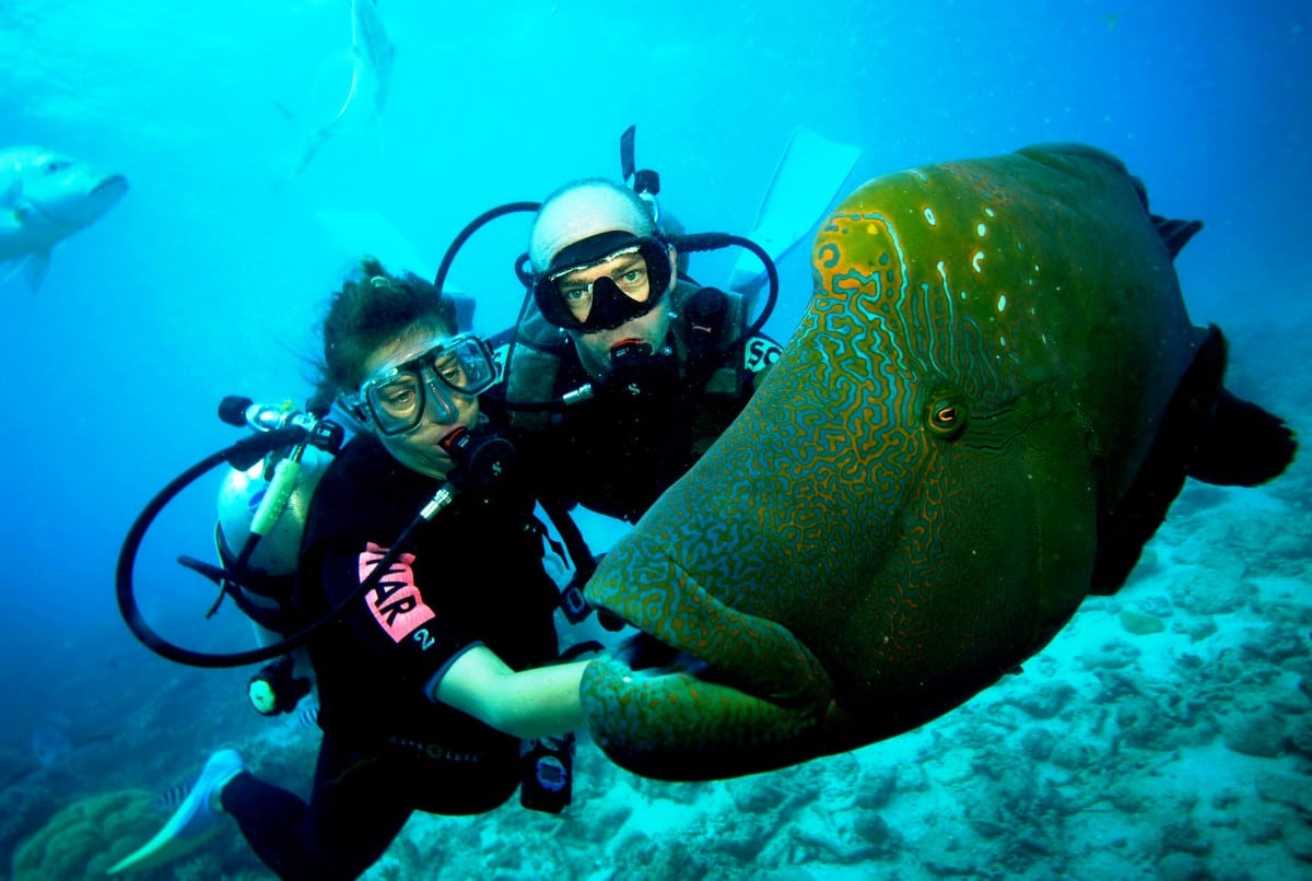 22 best scuba diving destinations in the world freeyork - Best place to dive the great barrier reef ...
