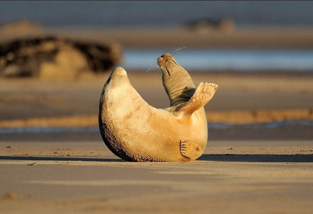 20 Adorable Animals That Have Mastered the Art of Stretching -nature, animals, adorable