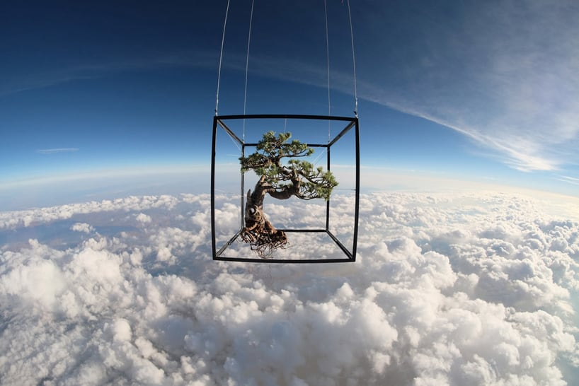 There's Life Out There: The Artist Sending Bonsai Trees Into Space -space, bonsai, artist