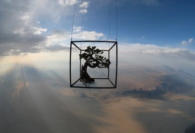 There's Life Out There: The Artist Sending Bonsai Trees Into Space 5