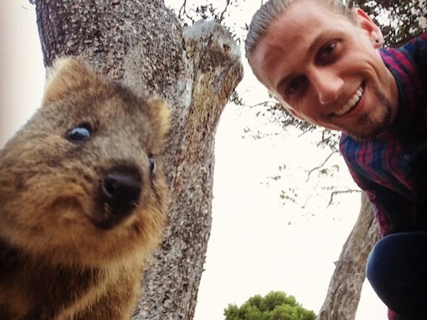 Quokka_Selfies_Meet_the_Worlds_happiest_Animal_on_Instagram_2015_10