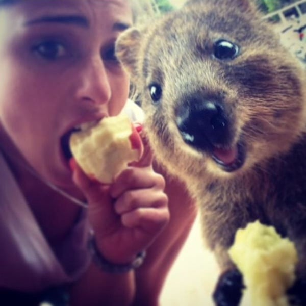 Quokka_Selfies_Meet_the_Worlds_happiest_Animal_on_Instagram_2015_12