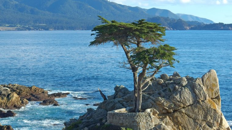 13 Most Beautiful and Famous Trees on Earth -trees, travel, lake