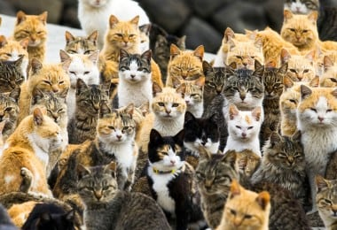 Cat Empire: Japanese Island Aoshima is Overrun by Cats 15