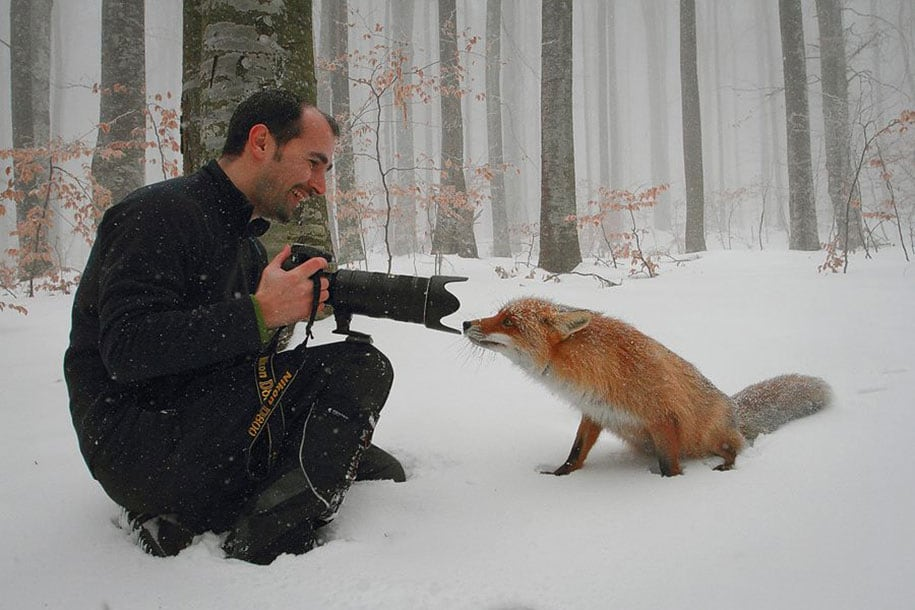 beautiful-foxes-wildlife-photography-7