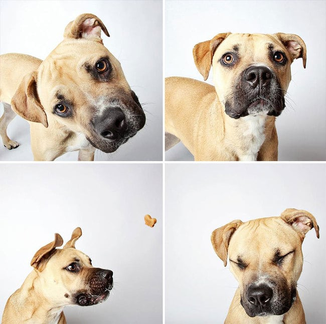 humane_utah_dog_quadruples_00