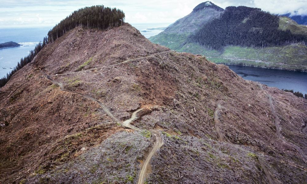 british-columbia-clearcut